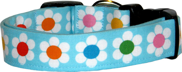 Vibrant Line of Daisies Aqua Dog Collar